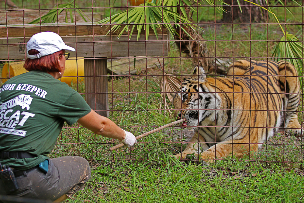 "Big Cat Rescue is an animal park that offers paying parkgoers the opportunity to view big cats, which the owner claims are ""rescued"" animals"